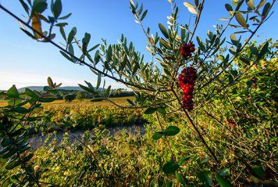 Vignes Buissonnières in Pic Saint Loup