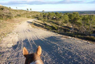 Réservez votre balade à cheval pour notre journée Vin & Art de Dimanche 19 Février