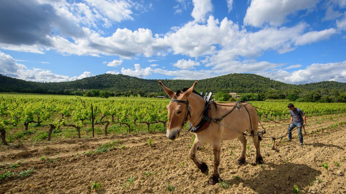Un cheval dans les vignes – Dimanche 12 Mars 2017